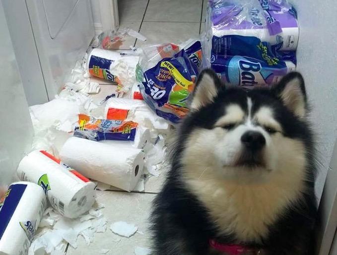 Photo of Što najgore što se može dogoditi kad ostavite svojeg kućnog ljubimca samog?